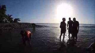 Hash 991 Video