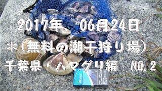 2017年06月24日に千葉県の某海岸にて潮干狩りを行いました。ハマグ...