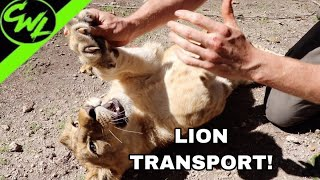 new-friends-lions