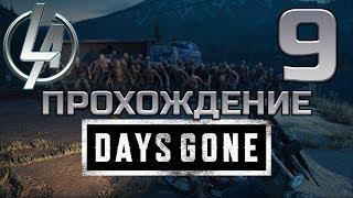 Days Goneps4 ► Девятый Стрим ► Финал близкоИли нет ► Жизнь после ► Прохождение