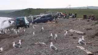 видео: День рыбака. (Рыбалка на Чукотке №4)