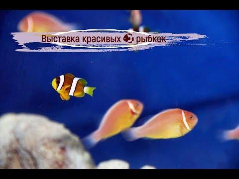 Красивые рыбки в аквариуме. Золотая рыбка. Выставка - YouTube