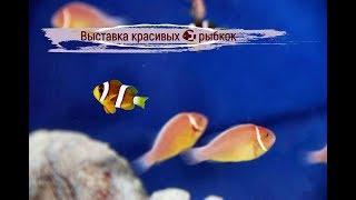 Красивые рыбки в аквариуме. Золотая рыбка. Выставка