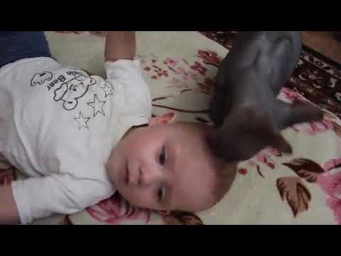 Кошка перепутала ребёнка с котенком - YouTube