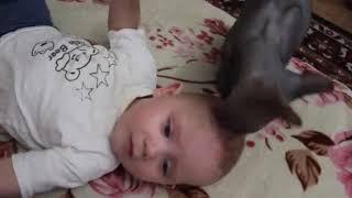 Кошка перепутала ребёнка с котенком