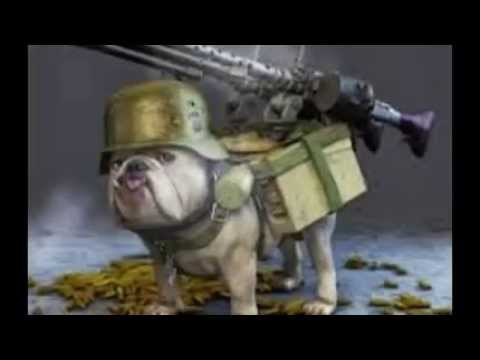 Watch Dogs  Carrying Weapons