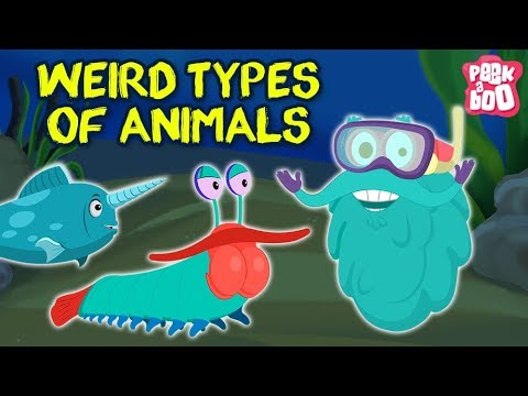 Weird Animals In The World - The Dr. Binocs Show    Funny Animals Cartoons Just for Kids & Children