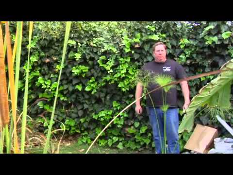 How to set up an outdoor fish pond youtube Setting up fish pond