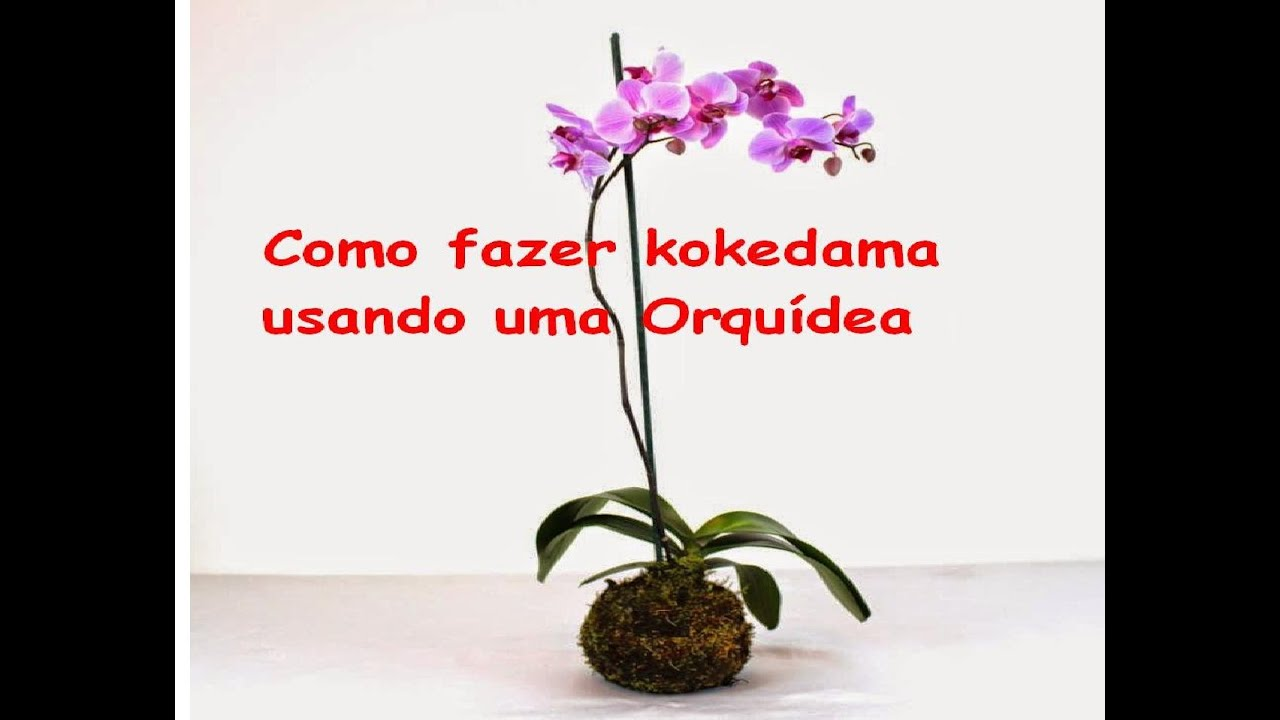 kokedama com orquidea