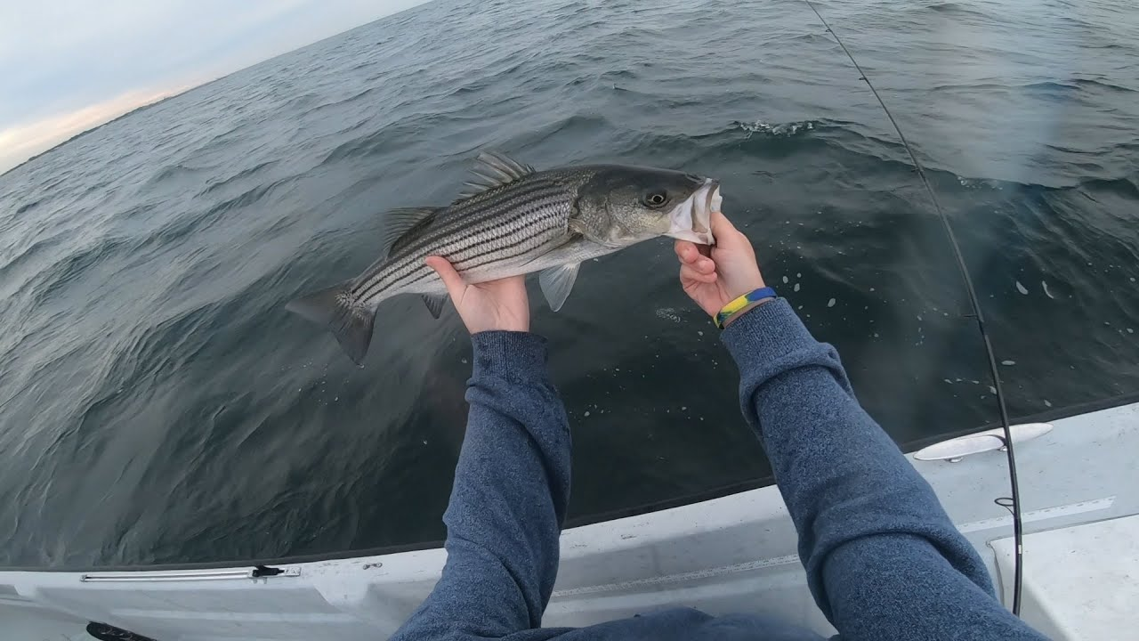 Striped Bass all to ourselves! - Maritime Fly [S1E11] September Stripers