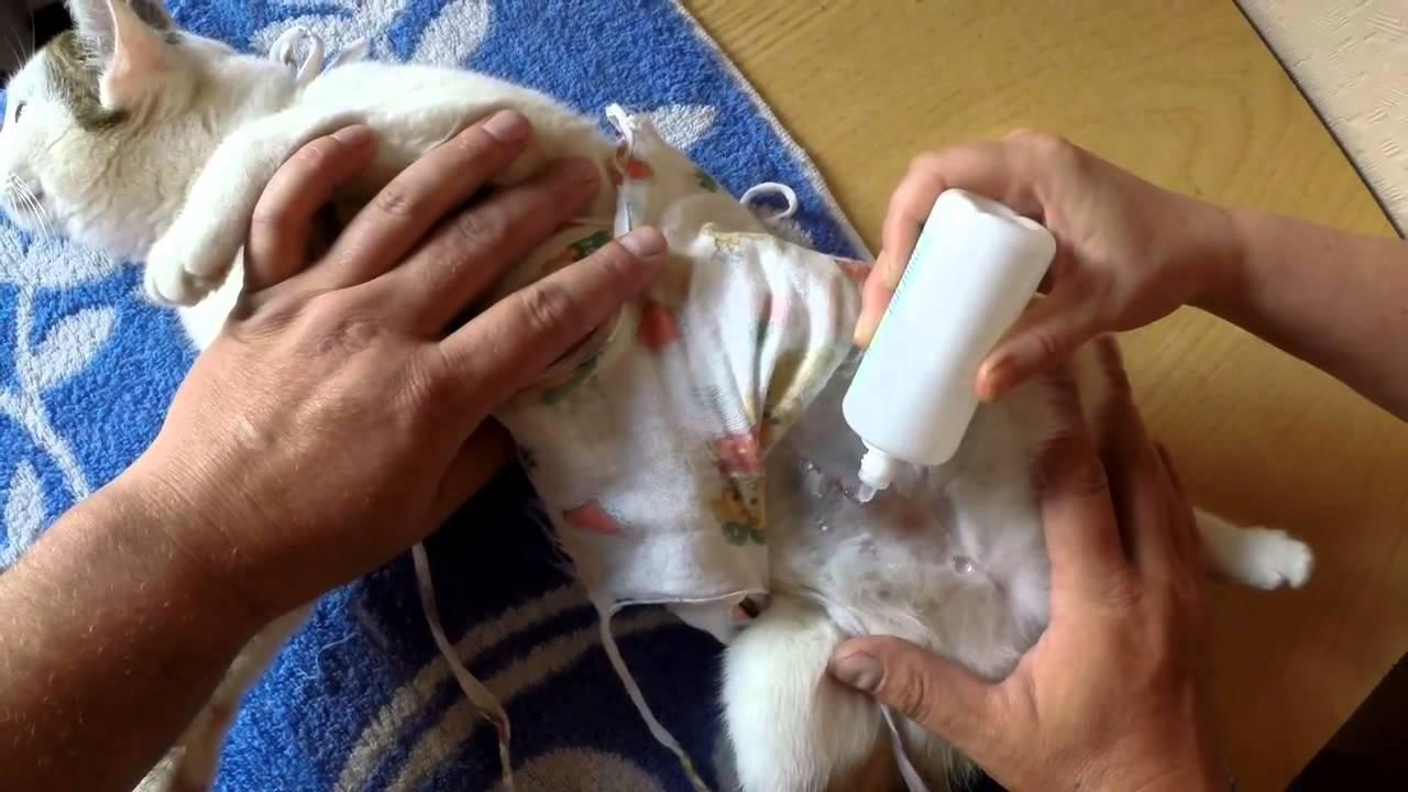 Чем обрабатывать швы после операции у кота