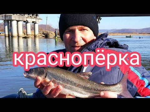 Рыбалка Приморский край. Майхе. Краснопёрка. Full HD