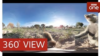 Play with Meerkats in 360°: Animals With Cameras Episode 1 | BBC One HD