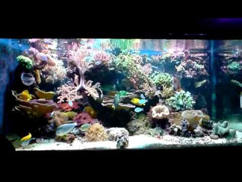 Acuario marino 2000 litros youtube for Acuario marino precio