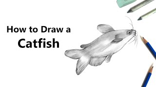 How to Draw a Catfish with Pencils [Time Lapse]