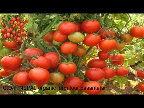 Organic farm tour (Community Development Foundation Nepal)CDF