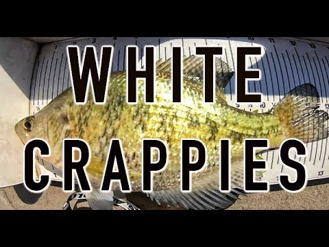 Kansas Crappie Fishing-Piscifun Fishing Action