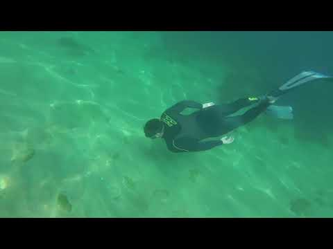 Snorkelling /spearfishing At South Milton (a Lot Of Fish)!!!!