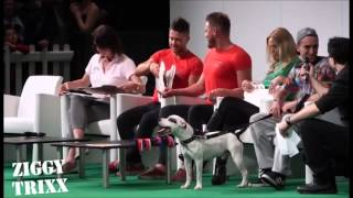 Ziggy Trixx The Staffordshire Bull Terrier Wins Superdogs Live @ The London Pet Show 2015