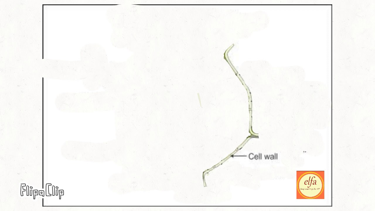 Draw well labelled diagram of plant cell NCERT Cbse ...