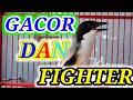 Apapun Jenis Cendet Nya Akan Emosi Dan Naik Karakter Fighternya Dengan Kicau Cendet Full Speed Ini  Mp3 - Mp4 Download