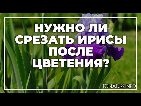 Нужно ли срезать ирисы после цветения? | toNature.Info