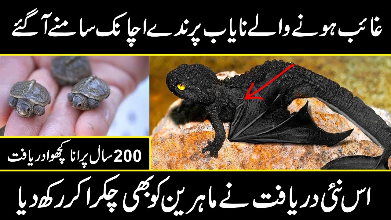 The rarest birds and animals in the world | unsolved mysteries of animals | Urdu cover