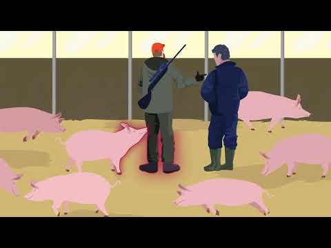 African Swine Fever: how to stay one step ahead