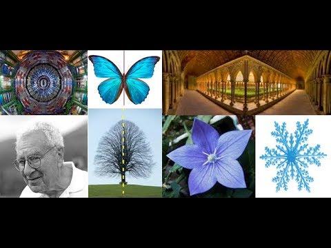 "Santopinto E. - ""Symmetries in nature, art and science - live Colloquium"