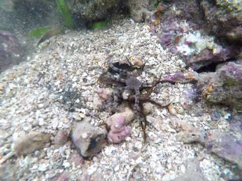 Underwater at Galeta, Panama
