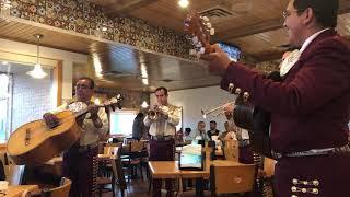 Mariachi Los Galleros de EL Paso, TX