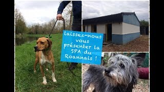 SPA du Roannais : Présentation du refuge !