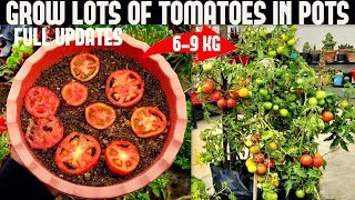 How To Grow Tomątoes At Home (SEED TO HARVEST)