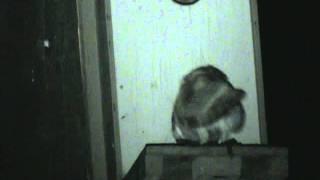Yori Ranches owlets may 11, 2011