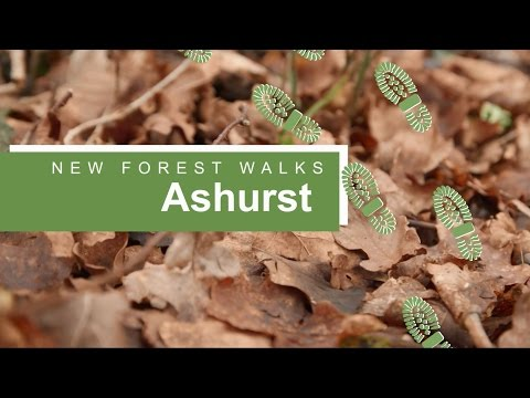 New Forest walks: Ashurst