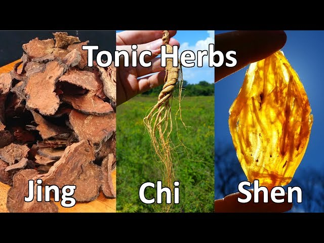 thumbnail image for Tonic Herbalism Overview: Jing Chi Shen