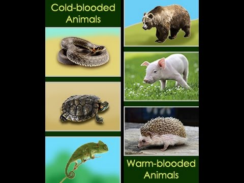 An In Depth Comparison Of Cold Blooded And Warm Blooded Animals