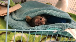 Marmoset Monkey Cage Update (BEFORE THE REDESIGN)
