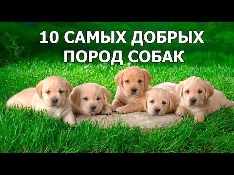 Самые красивые русские фамилии крутые фамилии для