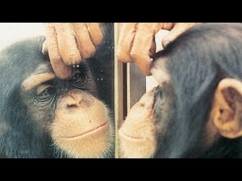 Funny Animals Vs Mirror Animals In Mirrors Hilarious Reactions Compilations