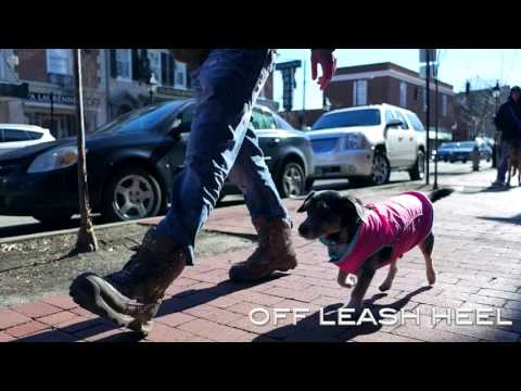 2-Year Old Dachshund, Winnie!  Wow, Epic Video! Small Dogs Off Leash | Electronic Collar