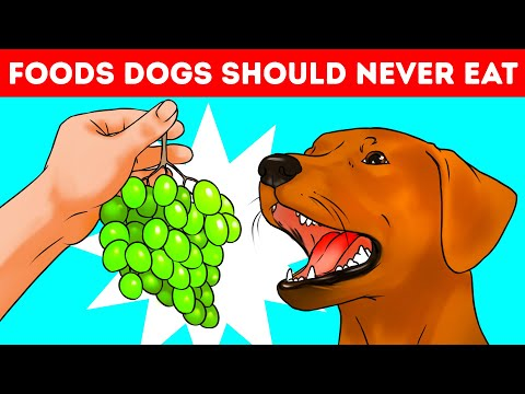 Why Dogs Can't Eat Grapes And 53 Jaw-Dropping Why's