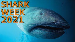 Shark Week 2021 Is Here!