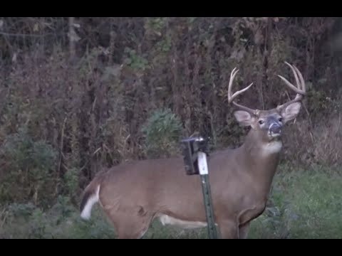Buffalo Cty Trophy Bucks, Tactics for Flowage Eyes - Larry Smith Outdoors