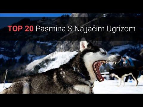 jaki-psi-–-top-20-pasmina-pasa-s-najjačim-ugrizom-na-svijetu-🐕