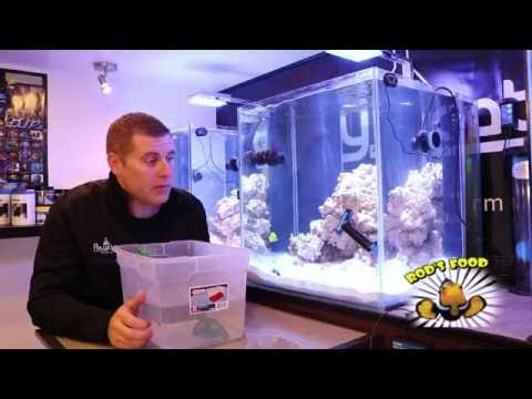 Reef Chromis Added To The Lab Tanks