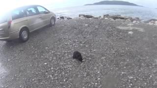 Кот смирился с дождем ради рыбки