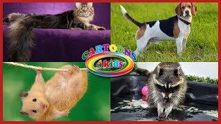 Изучаем домашних животных для детей / Развивающее видео с голосами животных