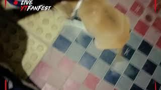 A trained baby dog || BAGLADESHI  DOG||