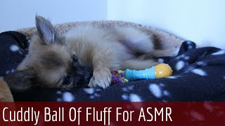 [so Cute] ♡ My Little Puppy Asmr Pomchi ♡ Ear To Ear Whispering